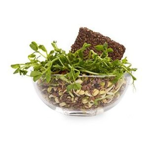 Салатный ростковый микс, «Свежесть», 100 г