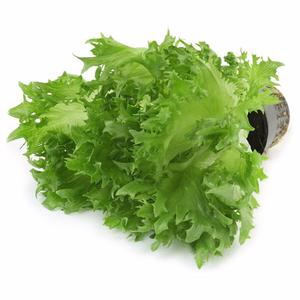 Салат фриллис в горшочке ТМ Metro Chef (Метро Шеф)